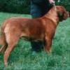 photo chien et chiot dogue de bordeaux : prairie