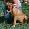 photo chien et chiot dogue de bordeaux : ultimesezptembre2003